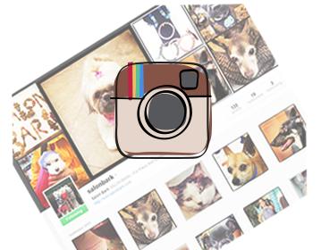 Salon Bark instagram
